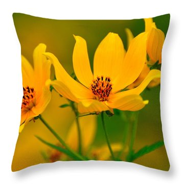 Falls Glory Throw Pillow by Marty Koch