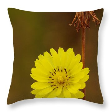 False Dandelion Flower With Wilted Fruit Throw Pillow