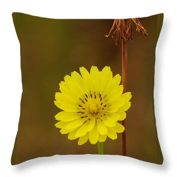 False Dandelion Flower With Wilted Fruit Throw Pillow by Daniel Reed