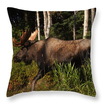 Throw Pillow featuring the photograph Fast Mover by Doug Lloyd