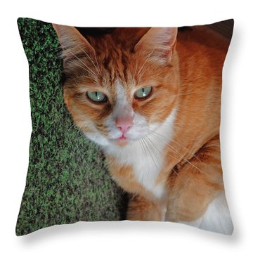 Fat Cats Of Ballard 6 Throw Pillow