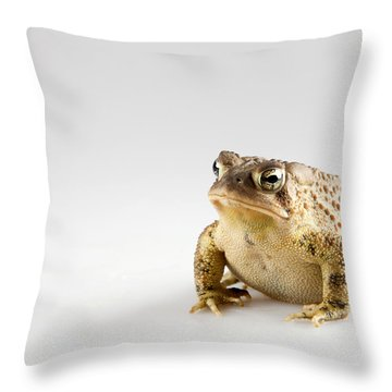 Fat Toad Throw Pillow by John Crothers