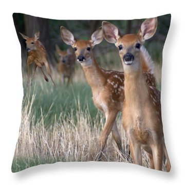 Fawns Fawns Throw Pillow by Bill Stephens