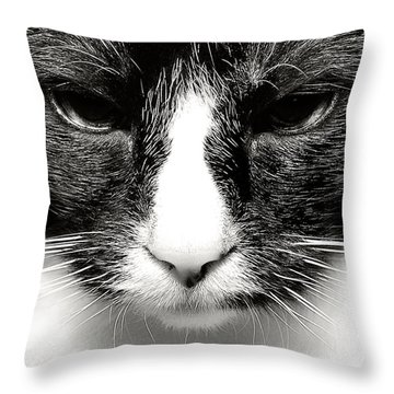Fearless Feline Throw Pillow