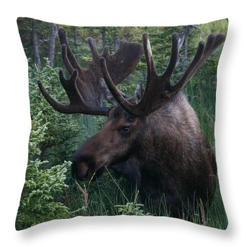 Throw Pillow featuring the photograph Feeding Along by Doug Lloyd