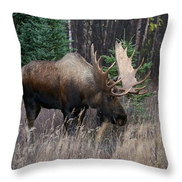 Throw Pillow featuring the photograph Feeding by Doug Lloyd