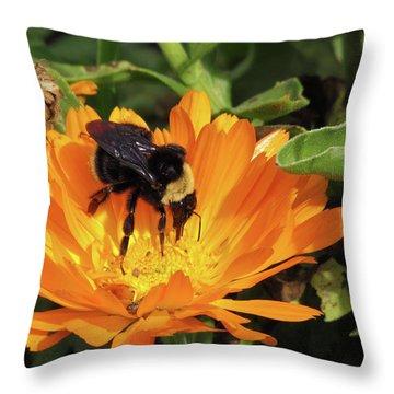 Feeding In Calendula Throw Pillow by Bonnie Muir