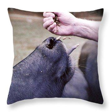 Feeding The Buffalo Throw Pillow