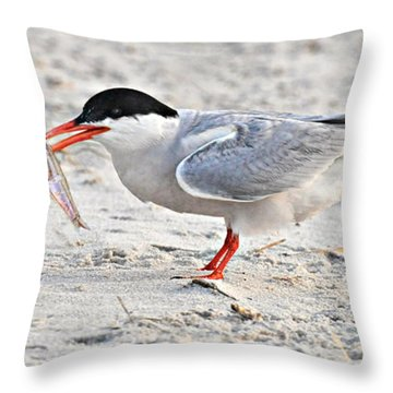 Feeding Time Throw Pillow by Dave Mills