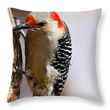 Female Red-bellied Woodpecker 3 Throw Pillow by Larry Ricker