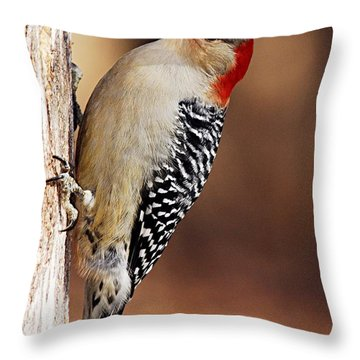 Female Red-bellied Woodpecker 5 Throw Pillow by Larry Ricker