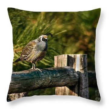 Fence Rider Throw Pillow by Robert Bales