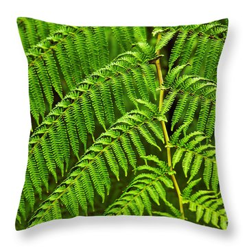 Fern Fronds Throw Pillow by Carlos Caetano