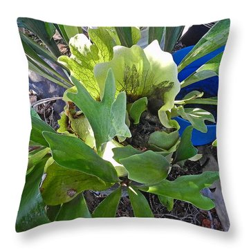 Throw Pillow featuring the photograph Fern With Blue Bucket by Patricia Greer
