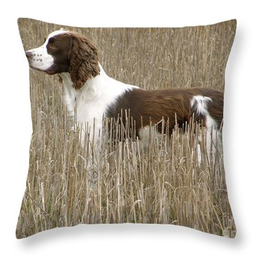 Field Bred Springer Spaniel Throw Pillow