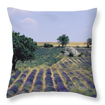 Field Of Lavender. Sault. Vaucluse Throw Pillow by Bernard Jaubert