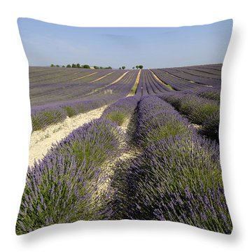 Field Of Lavender. Valensole. Provence Throw Pillow by Bernard Jaubert