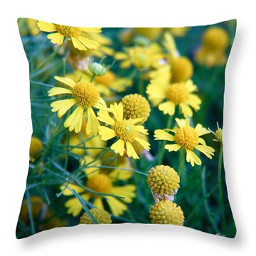 Field Of  Yellow Daisies  Throw Pillow by Ester  Rogers