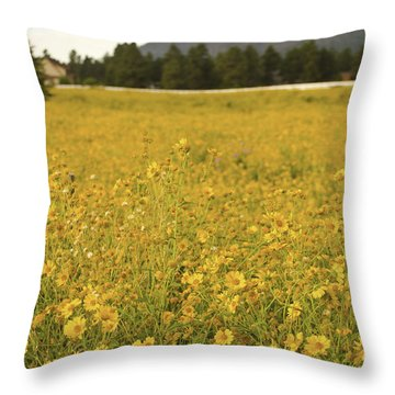 Field Of Yellow Daisy's Throw Pillow