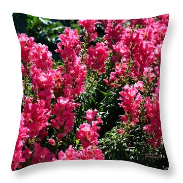 Fiery Pink Throw Pillow by Maria Urso