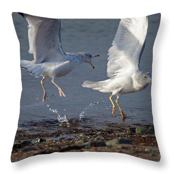 Fighting Gulls Throw Pillow by Karol Livote