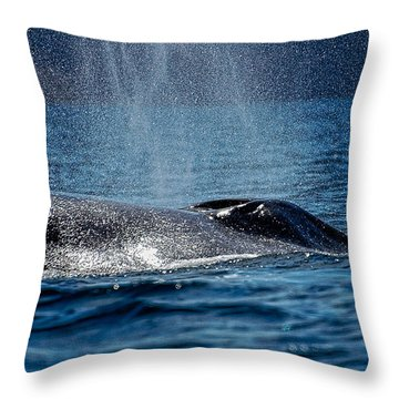 Throw Pillow featuring the photograph Fin Whale Spouting by Don Schwartz