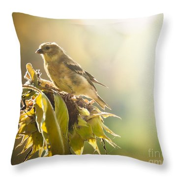 Finch Aglow Throw Pillow by Cheryl Baxter