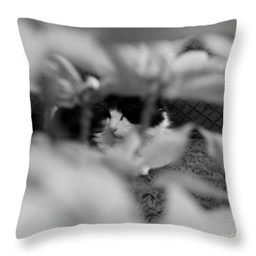 Throw Pillow featuring the photograph Find The Kitty by Jeanette C Landstrom