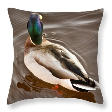 Fine Feathered Mallard Duck Throw Pillow by Ann Murphy