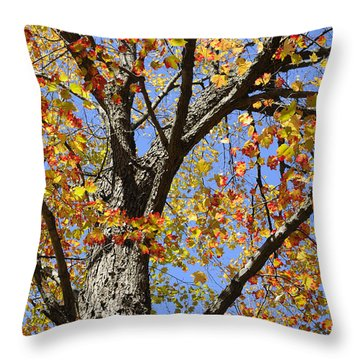 Fire Maple Throw Pillow by Luke Moore