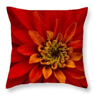 Firecracker Throw Pillow by Carrie Cranwill