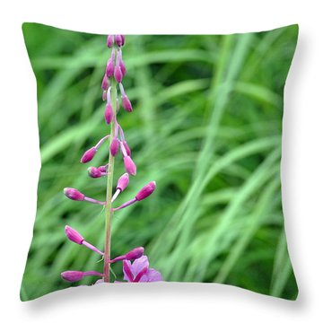 Fireweed Throw Pillow by Lisa Phillips