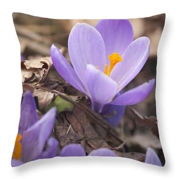 First Crocus Blooms Throw Pillow