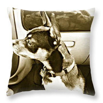 Throw Pillow featuring the photograph First Ride Home by Pamela Hyde Wilson
