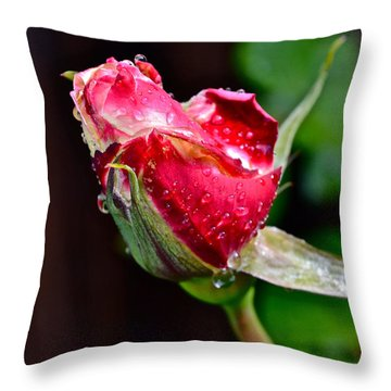First Rose Throw Pillow by Bill Owen