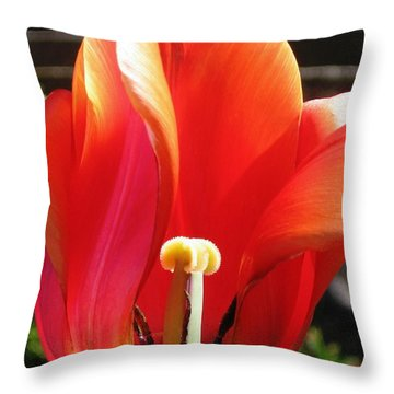 Throw Pillow featuring the photograph Flame by Rory Sagner
