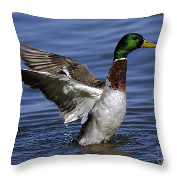 Flapping At Dusk Throw Pillow by Inspired Nature Photography Fine Art Photography