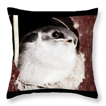 Fledgling Curiosity  Throw Pillow