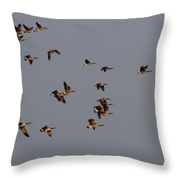Throw Pillow featuring the photograph Flight - Near Evening by Janice Adomeit