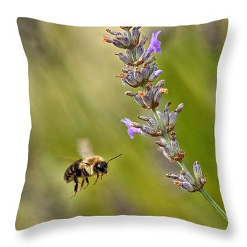 Flight Of The Bumble Throw Pillow by Karol Livote