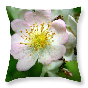 Floral Fireworks Throw Pillow by Neal Eslinger