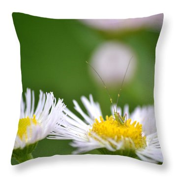 Throw Pillow featuring the photograph Floral Launch-pad by JD Grimes