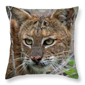 Florida Bobcat Throw Pillow