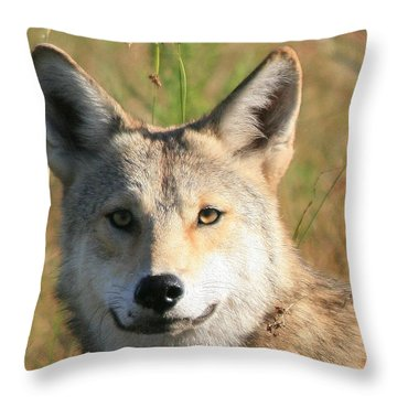 Florida Coyote Portrait  Throw Pillow