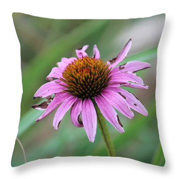 Flower At Waterfall Glen Forest Preserve Throw Pillow