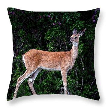 Flower Deer Throw Pillow by Steve McKinzie
