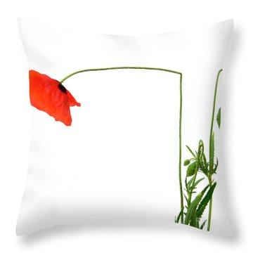 Flower Poppy In Studio. Papaver Rhoeas. Throw Pillow by Bernard Jaubert