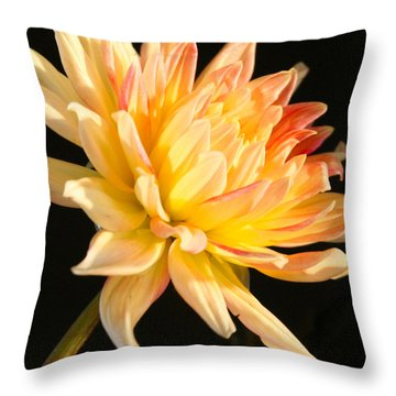 Throw Pillow featuring the photograph Flower Reflected On Black by Donna Corless