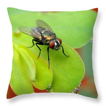 Fly After The Rain Throw Pillow
