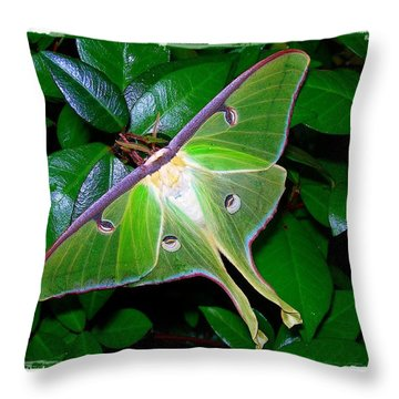 Throw Pillow featuring the photograph Fly Me To The Moon by Judi Bagwell